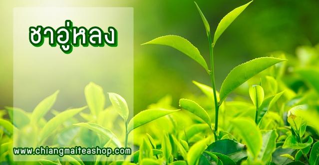 ชาอู่หลง-WulongTea