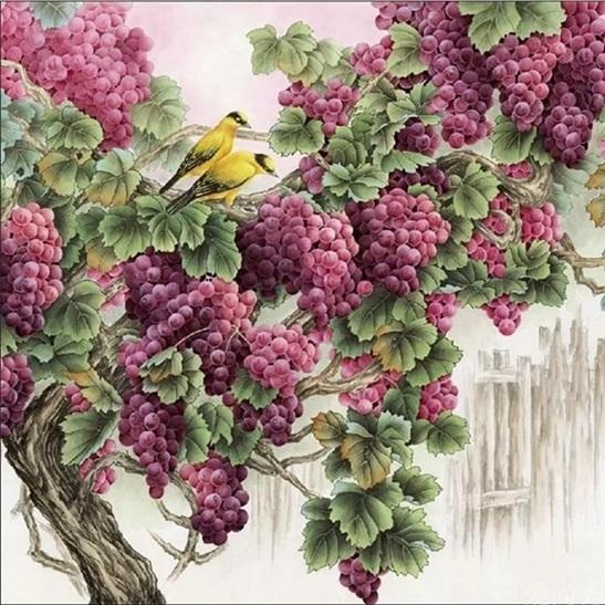 Grape fruit (พิมพ์ลาย)